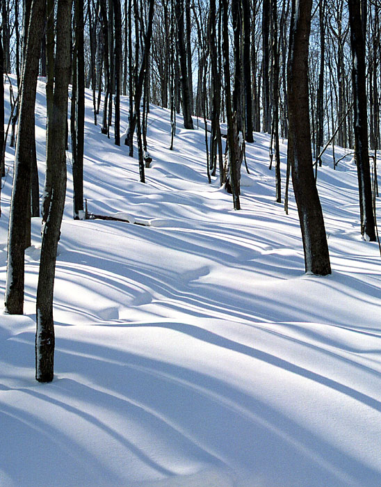 "photo ""Snow and Shadows"" tags: landscape, forest, winter"
