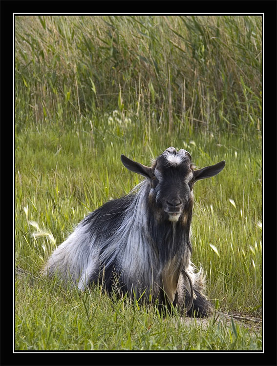 """photo """"portrait"""" tags: misc., nature, pets/farm animals"""