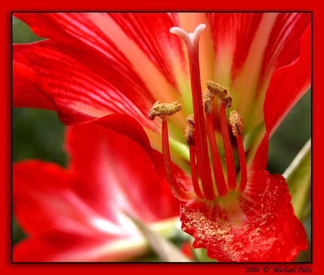 "photo ""The Beauty!!"" tags: macro and close-up, nature, flowers"