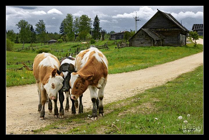"photo ""Young Bulls"" tags: portrait, genre,"