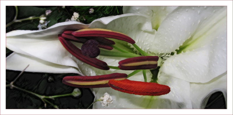 "photo ""Flower"" tags: nature, flowers"