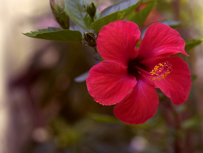 "photo ""FLOWER V"" tags: nature, flowers"