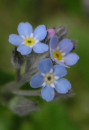 """фото """"Трио простецов."""" метки: природа, пейзаж, лето, цветы"""