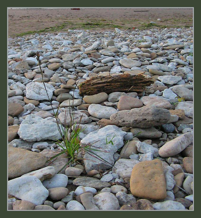 "photo ""And on stones flowers grow"" tags: nature, flowers"