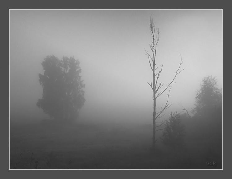 """photo """"Fog"""" tags: nature,"""