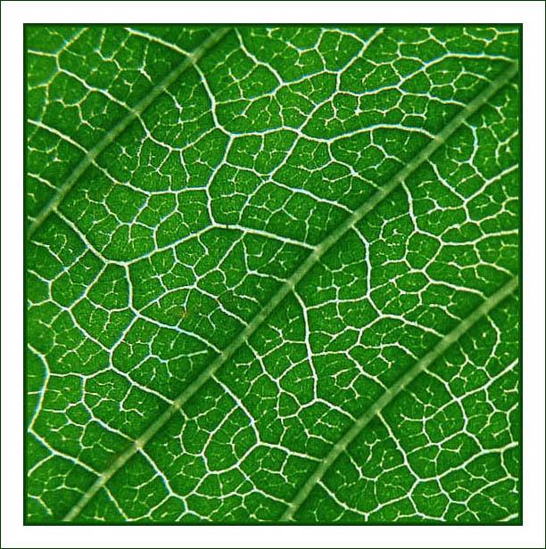 """фото """"///"""" метки: природа, макро и крупный план,"""