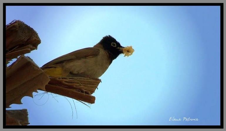"""photo """"To home"""" tags: nature, wild animals"""
