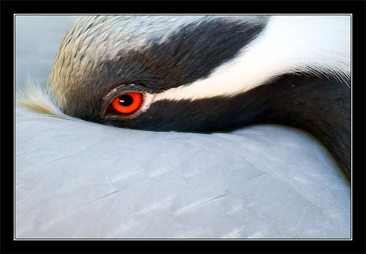 "photo ""Eye"" tags: nature, macro and close-up, wild animals"