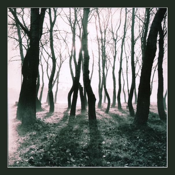 """фото """"xxx2"""" метки: пейзаж, лес"""