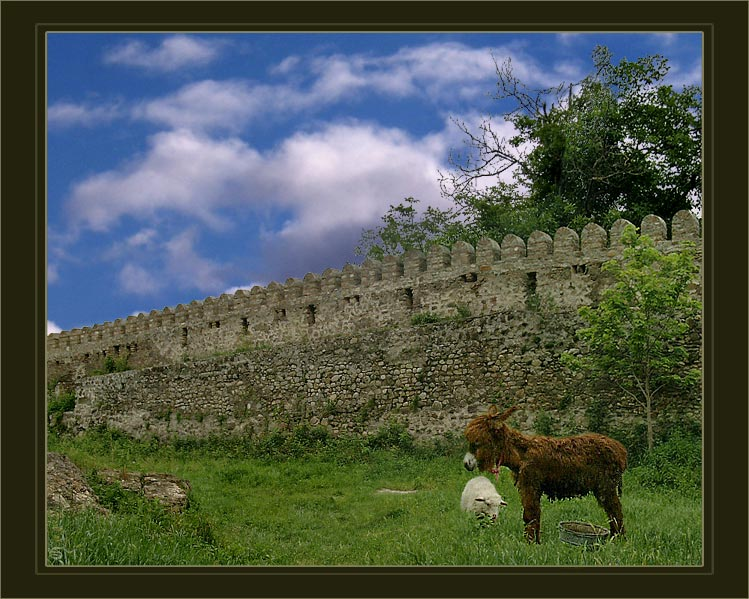 "photo ""Friends from Kakheti"" tags: nature, landscape, clouds, pets/farm animals"