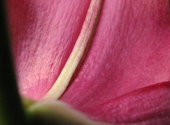 "photo ""Lily"" tags: macro and close-up, nature, flowers"