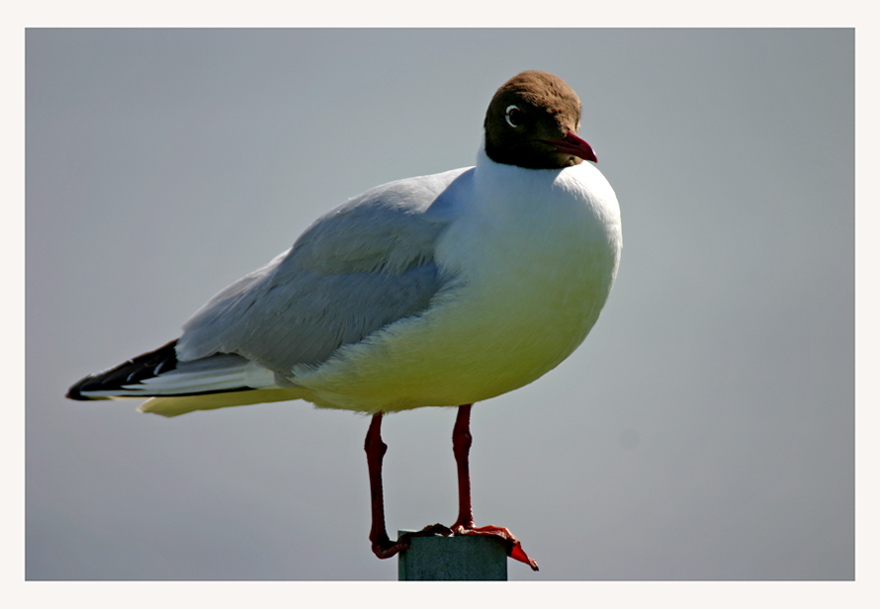 """photo """"Sea bird"""" tags: nature, wild animals"""