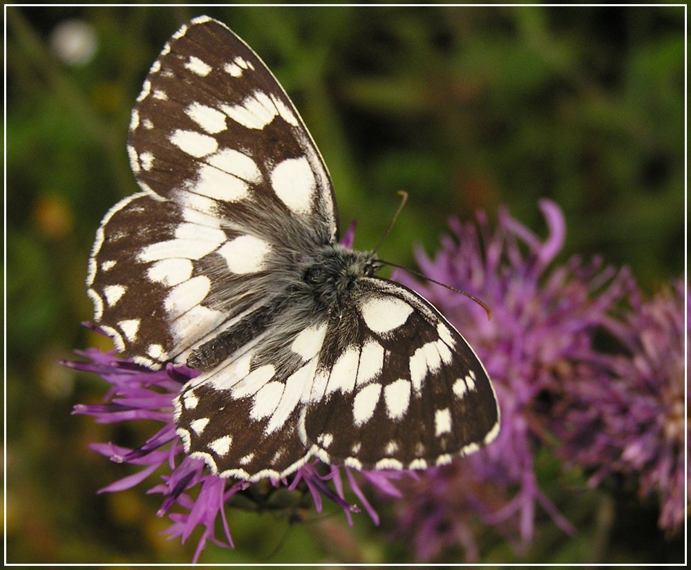 "фото ""buttefly"" метки: природа,"