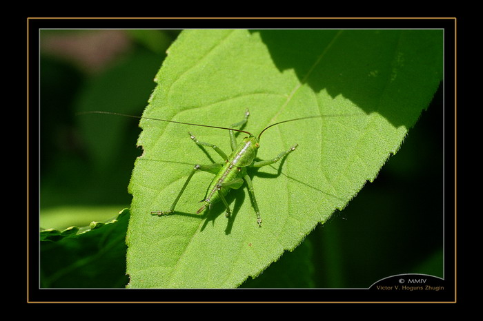 "photo ""Green on green"" tags: nature, macro and close-up, insect"