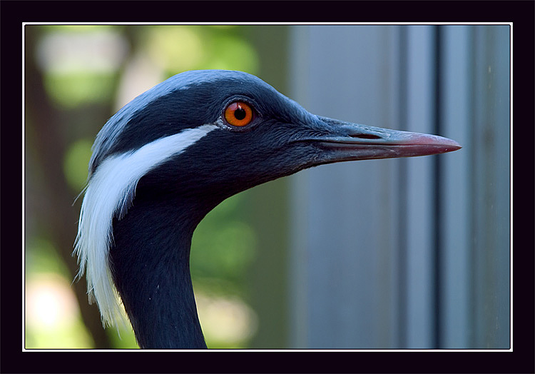 "photo ""Head shot"" tags: portrait, nature, wild animals"