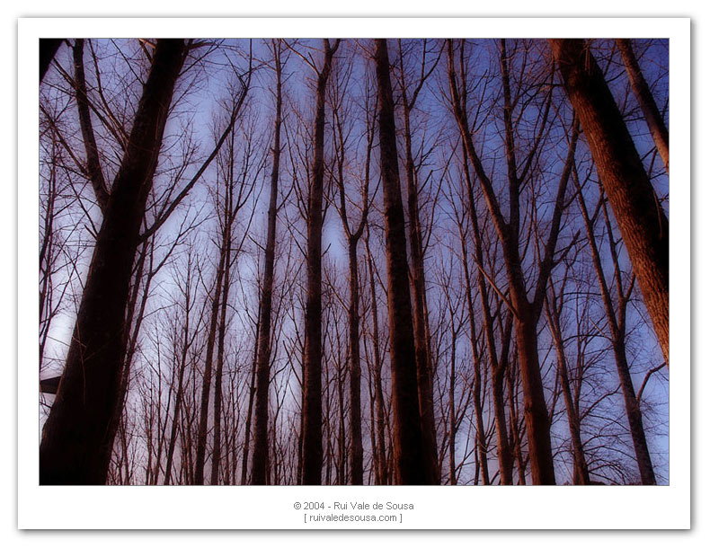 "photo ""trees I"" tags: misc.,"