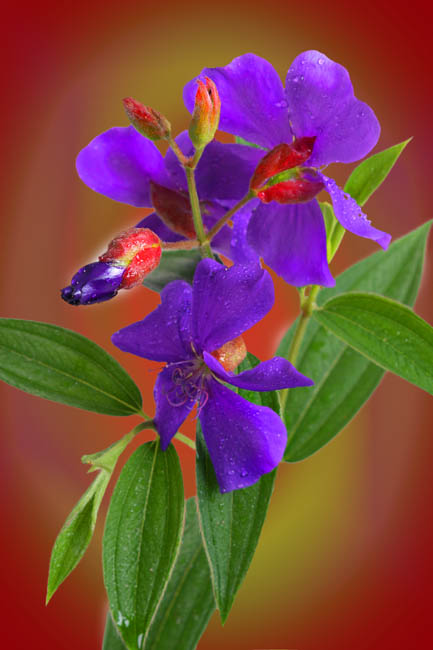 """photo """"Purple Beauty"""" tags: nature, flowers"""