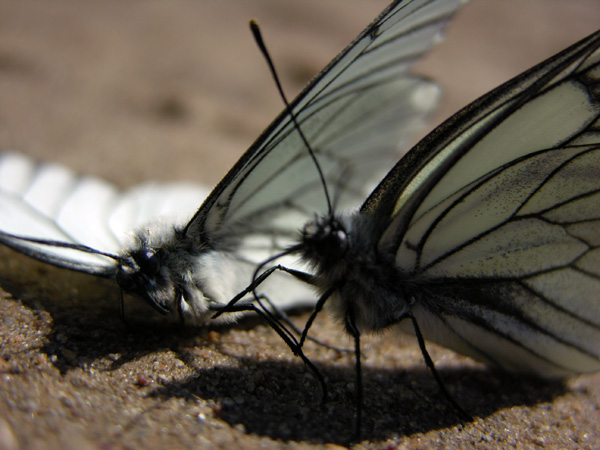 "photo ""Requiem"" tags: macro and close-up, nature, insect"