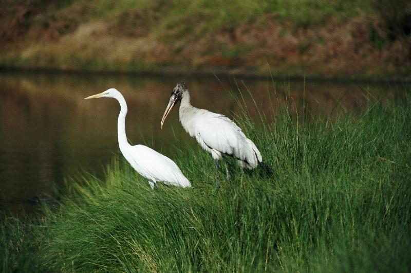 "photo ""2"" tags: nature, wild animals"