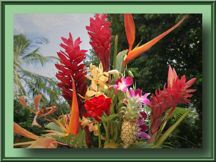 "photo ""Tropical flowers"" tags: nature, flowers"