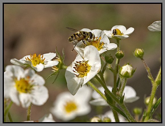 "photo ""Summer"" tags: macro and close-up, nature, insect"