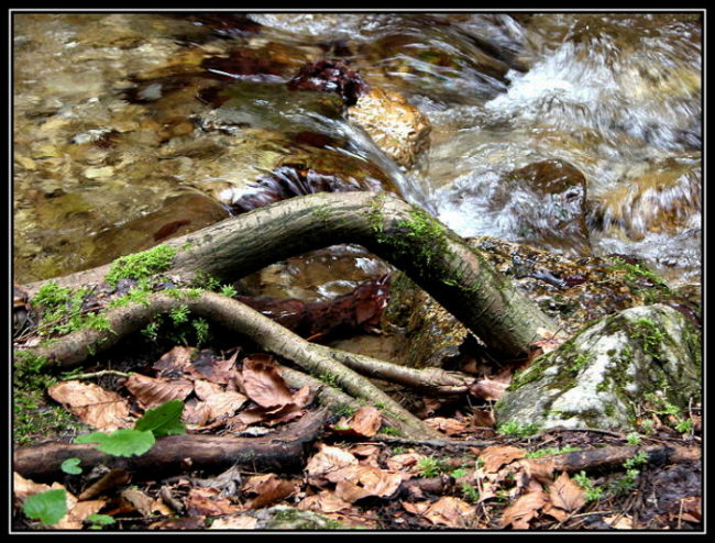"photo ""Stream"" tags: nature, landscape, water"