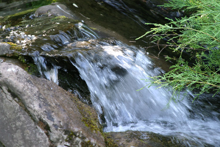 "photo ""Small forest cascade"" tags: landscape, forest, water"