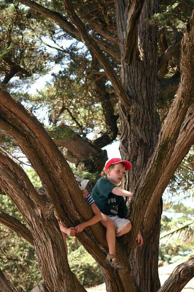 "photo ""Playing on the old tree"" tags: portrait, children"