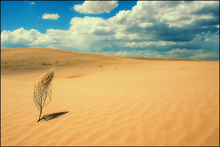 "photo ""Little Sahara - 2"" tags: landscape,"