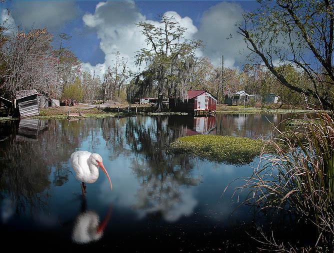 "photo ""Louisiana Bayou Scene"" tags: landscape, travel, North America, water"