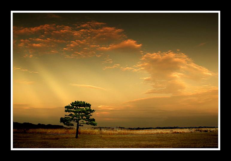 "photo ""tree"" tags: misc.,"