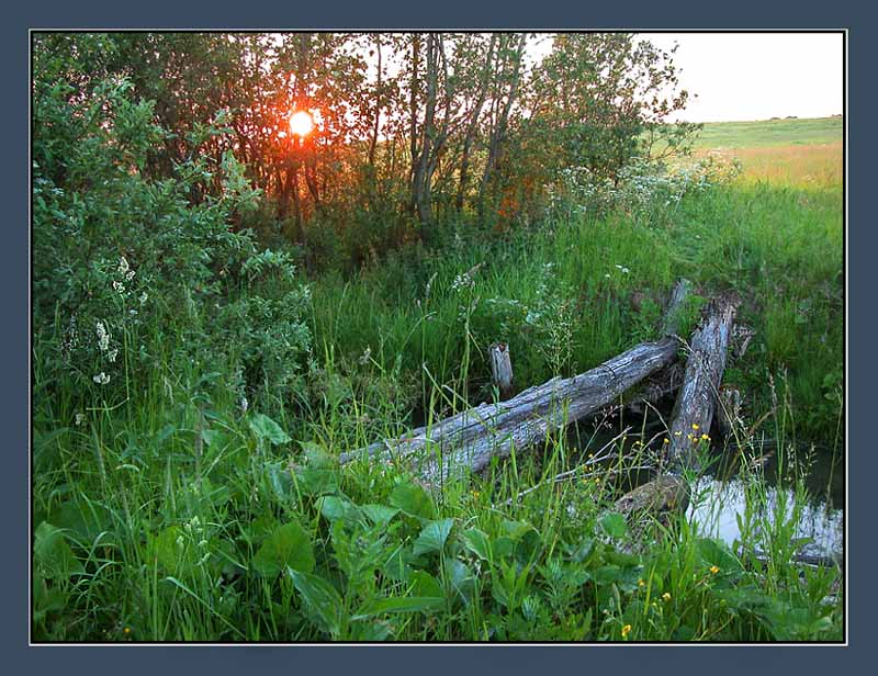 "photo ""The old bridge"" tags: landscape, summer, sunset"