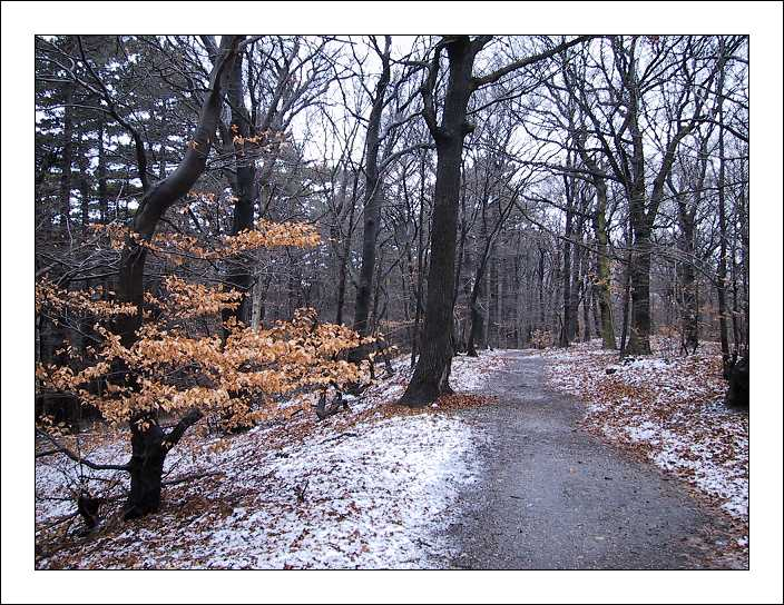 "photo ""Winter Memories"" tags: landscape, forest, winter"