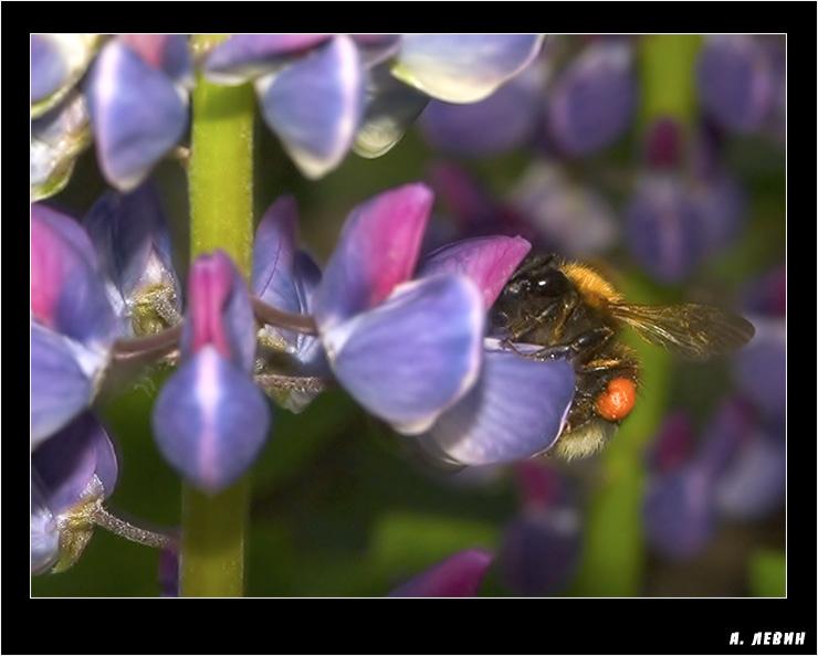 """photo """"Труженица"""" tags: macro and close-up, nature, insect"""