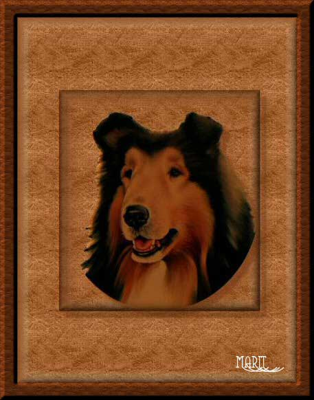 "photo ""My dog"" tags: portrait, misc.,"