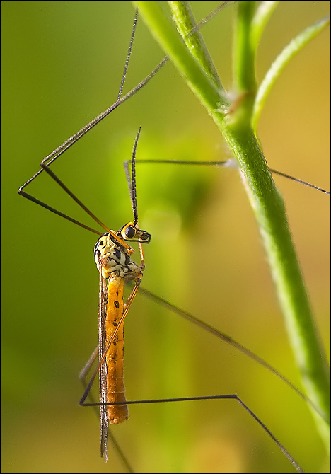 "photo ""Leggy"" tags: macro and close-up,"