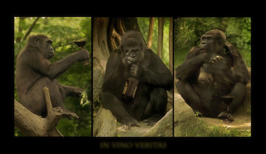"""photo """"In Vino Veritas"""" tags: nature, wild animals"""