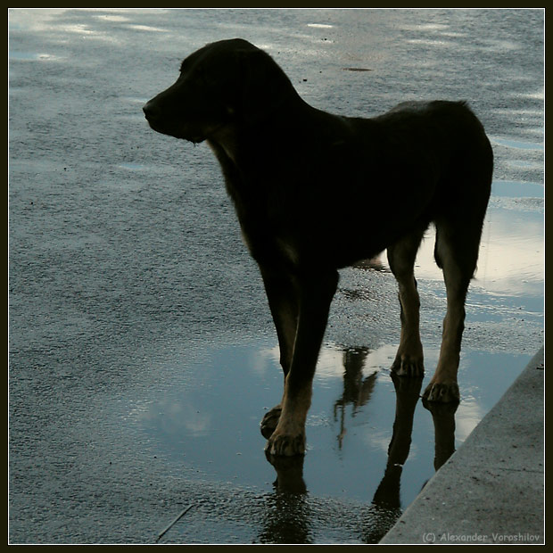 "photo ""Pitersburg the Black Dog"" tags: genre, misc.,"