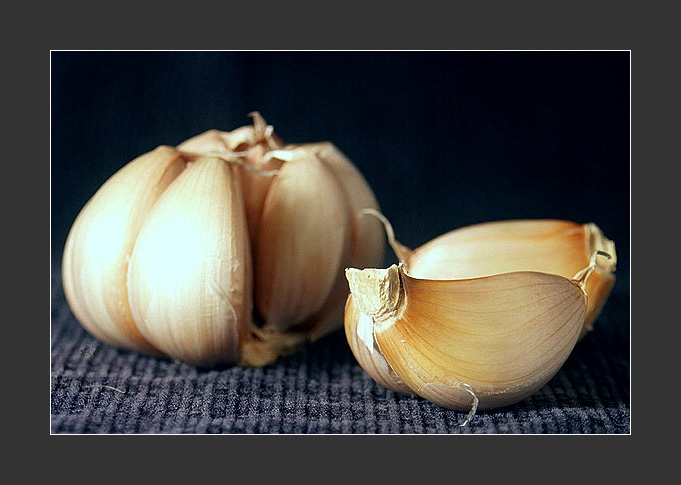"photo ""Garlic"" tags: still life,"