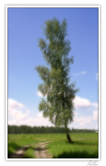 "photo ""In a field a birch..."" tags: landscape, nature, summer"