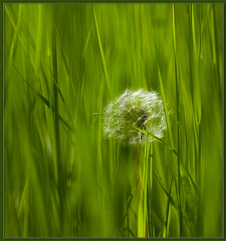 "photo ""grass 1"" tags: macro and close-up,"