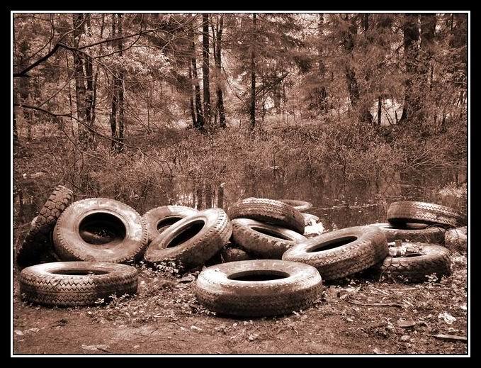 """фото """"Вулканизация..."""" метки: пейзаж, лес"""