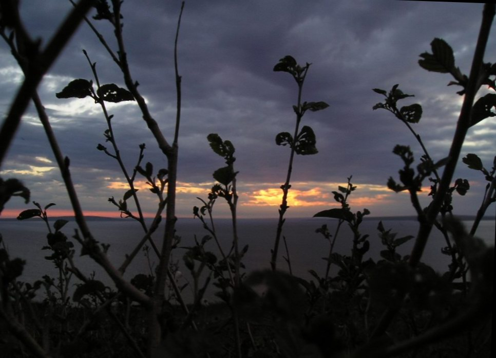 "photo ""Sight at the leaving sun through poor vegetation"" tags: landscape, clouds, sunset"