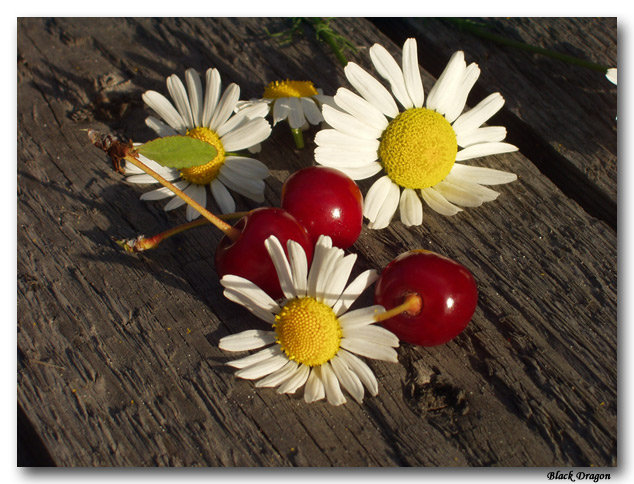 "photo ""***ooo"" tags: macro and close-up, still life,"