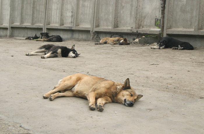 """фото """"созвездие псов"""" метки: природа, жизнь ФФ, домашние животные"""
