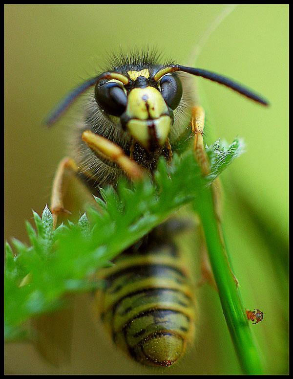 "photo ""ATAK!!!"" tags: macro and close-up,"