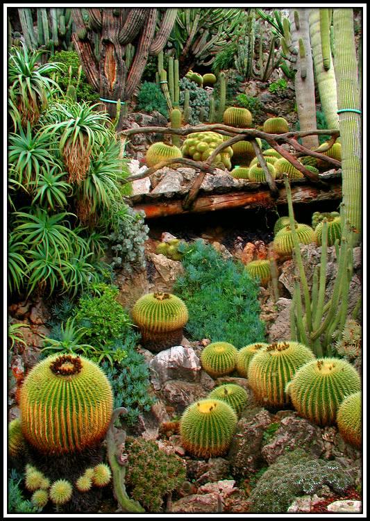 """фото """"Cactaceous field"""" метки: природа, цветы"""