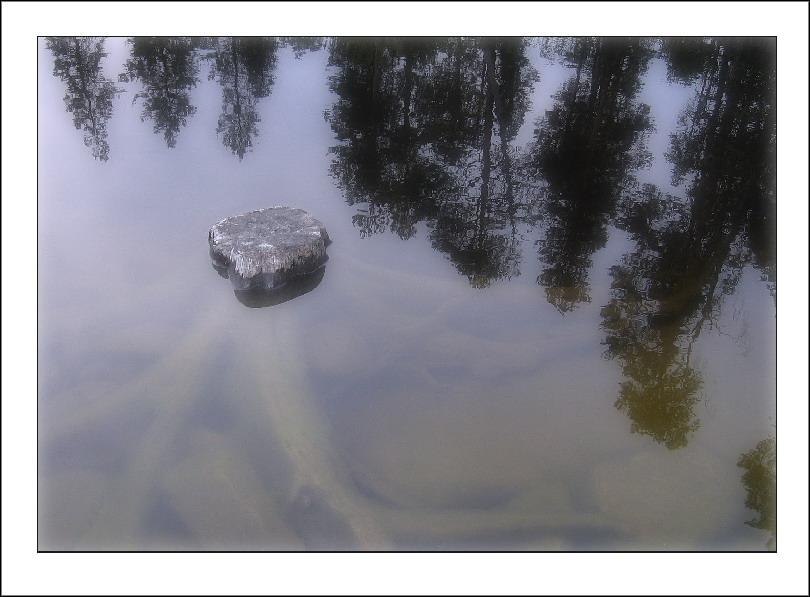 """photo """"Unsurvivor"""" tags: landscape, forest, water"""