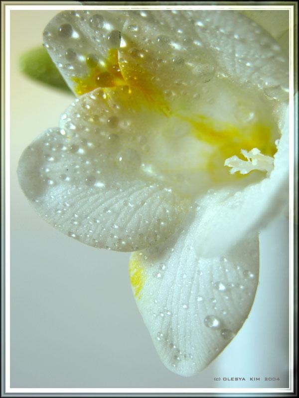 """фото """"FRESHNESS"""" метки: макро и крупный план, природа, цветы"""