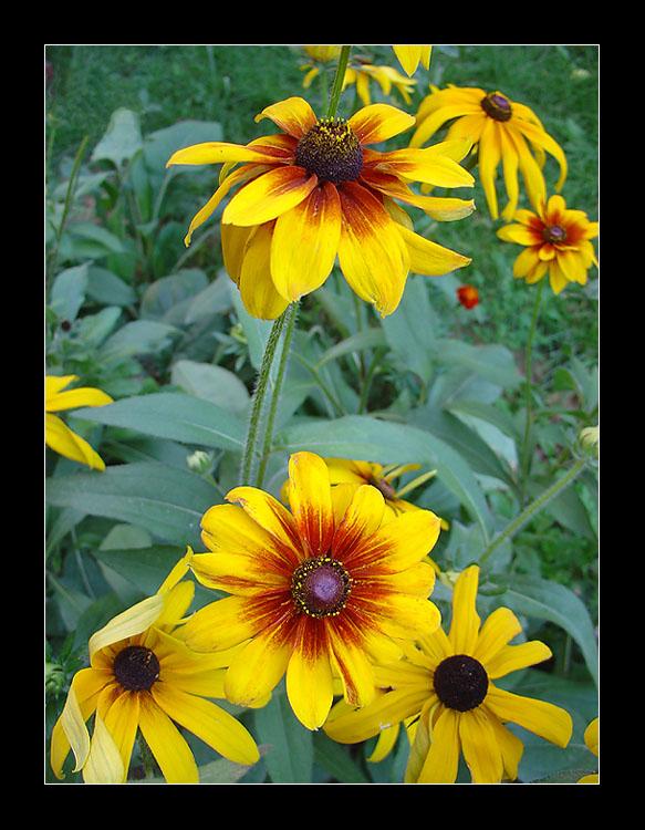 "фото ""Желтый сад"" метки: природа, цветы"